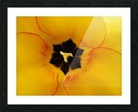 DSC00675 Picture Frame print