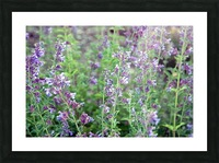 Wildflowers Picture Frame print