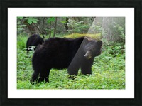 3299-Black Bear Picture Frame print