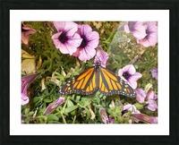 DSCN0649 Picture Frame print