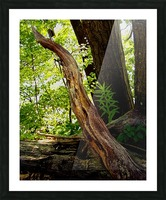 Wooden I   copy Picture Frame print
