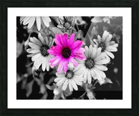 One Colored Daisy Picture Frame print