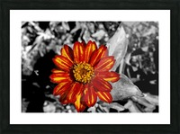 Red Flower Picture Frame print