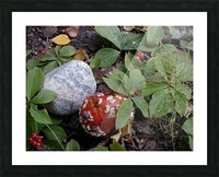Red Mushroom & Rock Picture Frame print