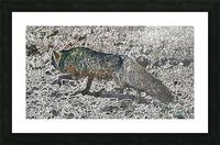 Denali Fox Picture Frame print