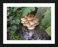Bun Mushrooms Picture Frame print