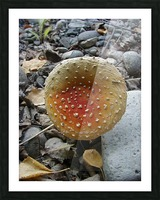 Red Mushroom Picture Frame print