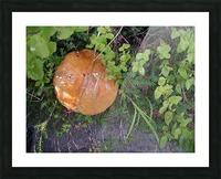 Bisquit Mushroom Picture Frame print