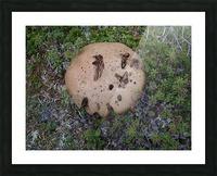 Cookie Mushroom Picture Frame print