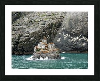 Seals Picture Frame print