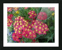 Red Flowers Picture Frame print
