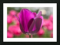 Violet - Violette Picture Frame print