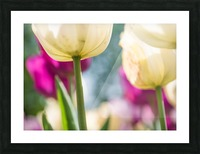 Under The Tulips - Sous Les Tulipes Picture Frame print