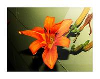 sofn-D014FA2F Picture Frame print