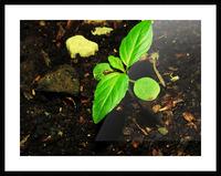 sofn-16FB61B2 Picture Frame print