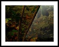 sofn-163F956E Picture Frame print