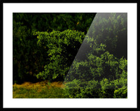 F (15) Picture Frame print