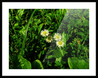 sofn-D38C2562 Picture Frame print
