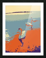 Swans Picture Frame print