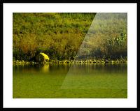 sofn-23FF155D Picture Frame print