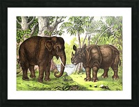 Elephant And Rhinoceros Picture Frame print