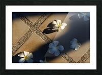 Plumeria flower on floor Picture Frame print