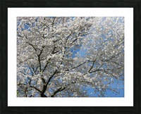 White Spring Blossoms Photograph Picture Frame print