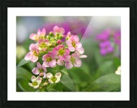 Small Pink Flowers Photography Picture Frame print