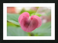 Heart Shape Pink Flower Photograph Picture Frame print