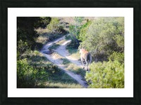 A Deer on the Path Picture Frame print