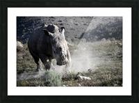 Rhino Picture Frame print