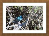 Blue Reflective Bird Picture Frame print
