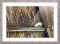 Bone and Wood Picture Frame print