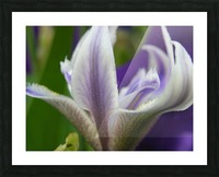 Purple Flower Photography Picture Frame print