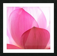 Lily Macro Picture Frame print