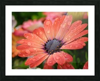 Orange Flower Covered In Rain Drops Photograph Picture Frame print