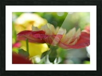 Garden Flowers Art Photograph Picture Frame print