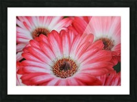 Red & White Flower Photograph Picture Frame print
