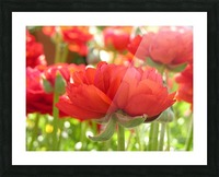 Red Rose Garden Photograph Picture Frame print