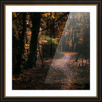 Forest 2_OSG Picture Frame print