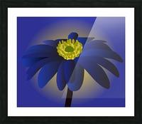 Anemone Blanda Flower Art Picture Frame print