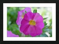 Purple Flower Photograph Picture Frame print
