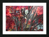 Beautiful Red Fall Foliage Picture Frame print