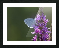 Butterfly on a flower Picture Frame print