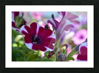 Pink Flowers Photograph Picture Frame print