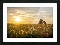 facing the sun Picture Frame print