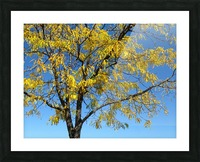 Beautiful Yellow Fall Foliage Picture Frame print