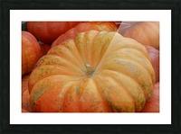 Beautiful Pumpkins Photograph Picture Frame print