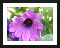 Pink Flower Photography Picture Frame print