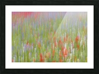 La fioritura di Castelluccio Picture Frame print